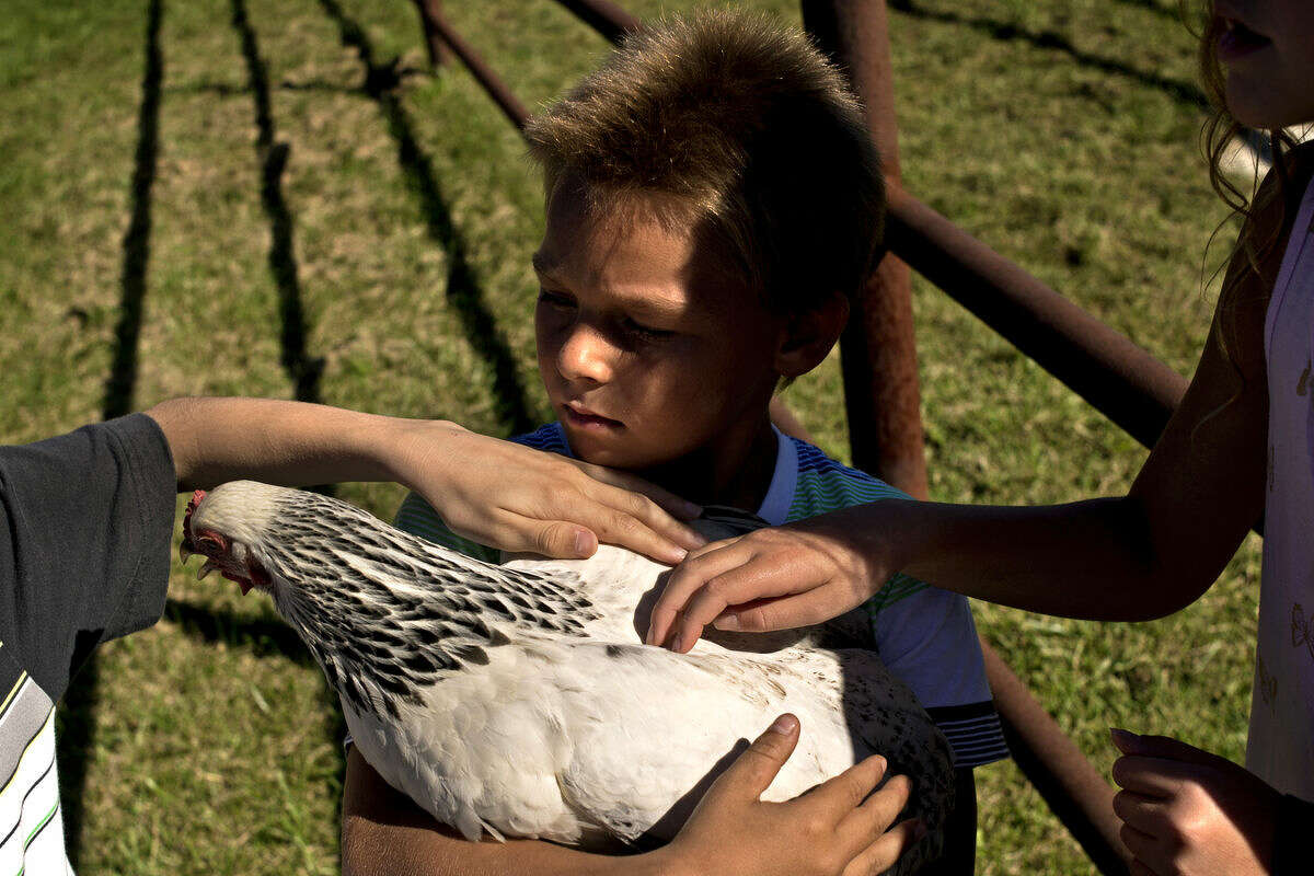Cameron Rider, 9, of Meridian Elementary, holds a chicken as others pet her on Tuesday during the 28th annual farm tour for fourth-graders hosted by Gerald and Carolyn Laurenz. More than 500 children from Midland County schools visited the Wheeler-based farm to learn about agriculture from corn mazes to dairy cows.