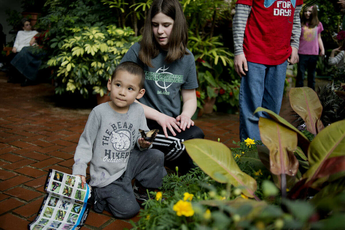 Jet Park, 4, of Midland, holds a butterfly that Alana Ward, 13, gave him at Dow Gardens during Butterflies in Boom on Tuesday.