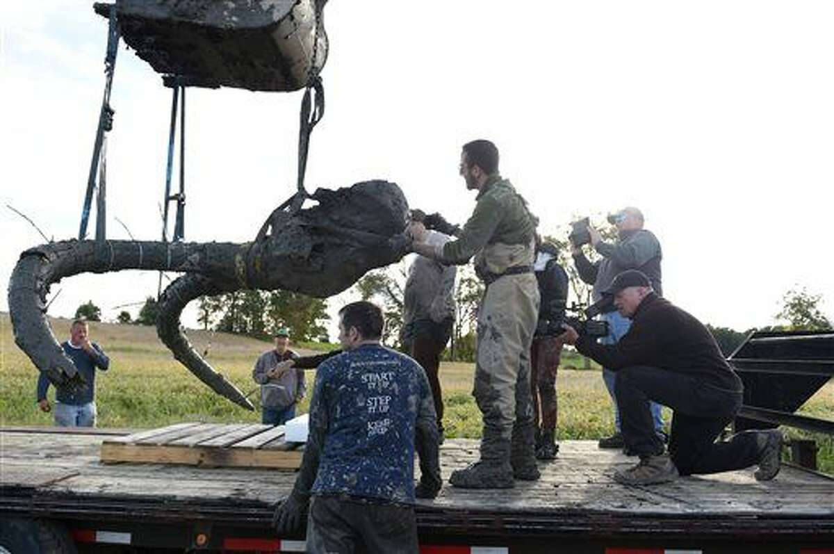 In this photo taken Thursday, Oct. 1, 2015, using straps and zip ties to help secure cracks in the tusks, the remains of a woolly mammoth are lifted out of the ground and placed on a trailer for transpor, as University of Michigan professor Dan Fisher and a team of Michigan students and volunteers work to excavate a woolly mammoth found on a farm near Chelsea, Mich. (Melanie Maxwell/The Ann Arbor News via AP)