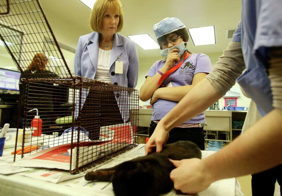 Kathy Davis, left, is leaving Animal Care Services at the end of the month. The next director at ACS must continue the progress she achieved during her tenure. Photo: Helen L. Montoya /San Antonio Express-News / ©2013 San Antonio Express-News