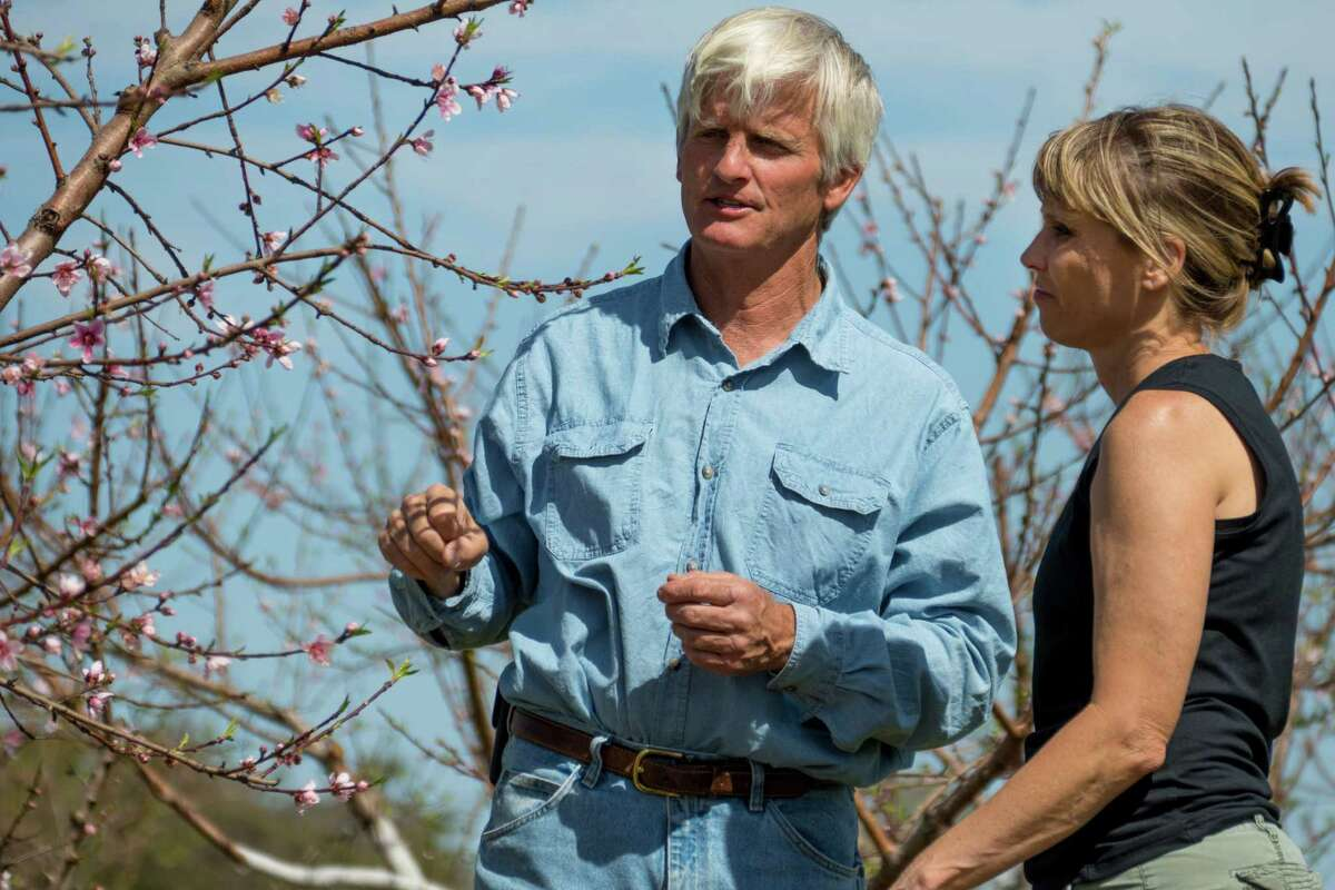 Russ and Lori Studebaker of Studebaker Farms near Fredericksburg examine peach blossoms in their orchard . Despite the warm winter, there were enough