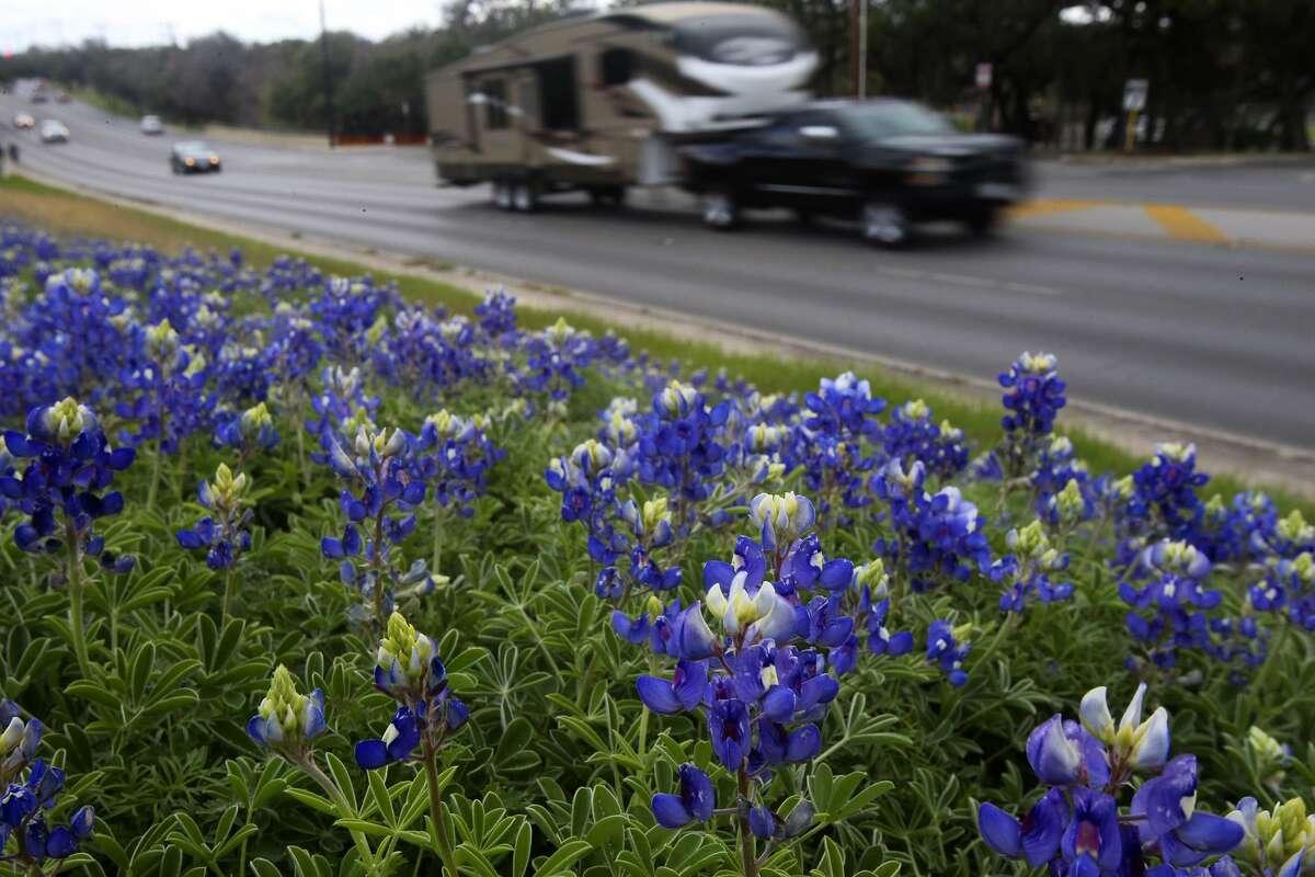 Traffic passes some blooming bluebonnets Feb. 29, 2016, on the 13,000 block of Jones Maltsberger.