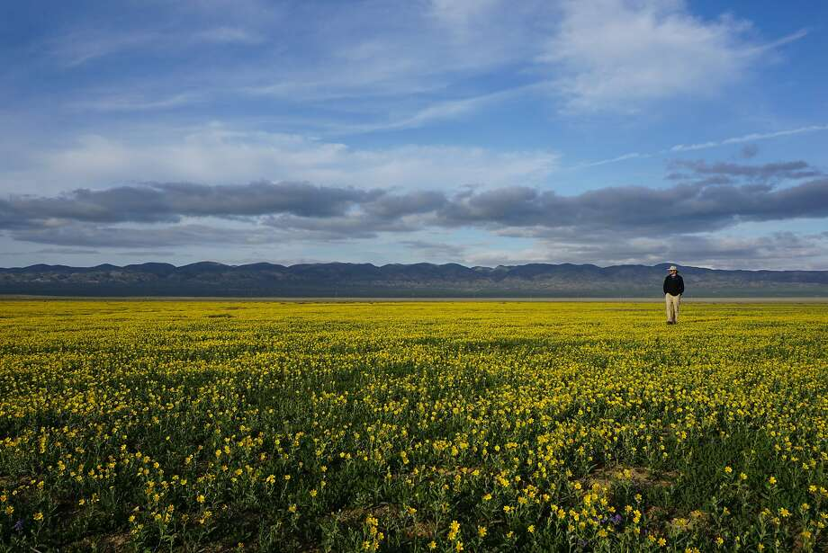 Wandering among the wildflowers can be a full-time occupation on the Carrizo Plain. Photo: Andy Murdock, Special To The Chronicle