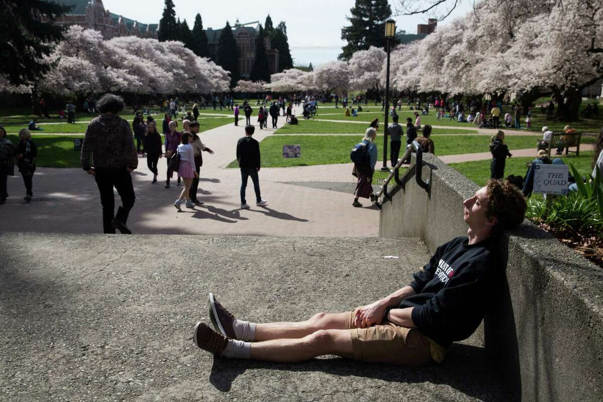 A student naps in the sun as spectators enjoy the blooming Yoshino Cherry Trees at the University of Washington on Friday, Mar. 19, 2016.
