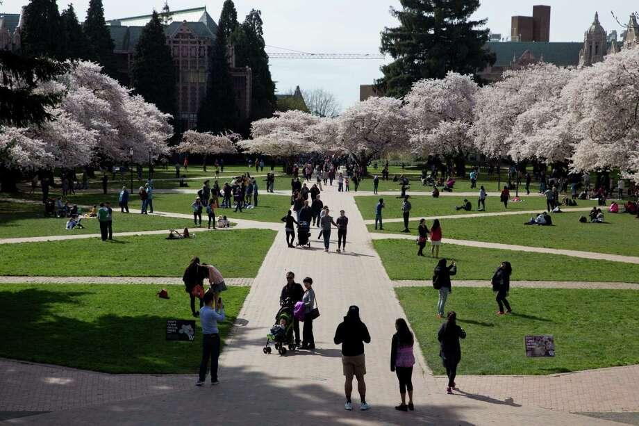 University of Washington's famed Yoshino cherry trees blossom amidst spectators on Friday, Mar. 19, 2016. Photo: GRANT HINDSLEY, SEATTLEPI.COM / SEATTLEPI.COM