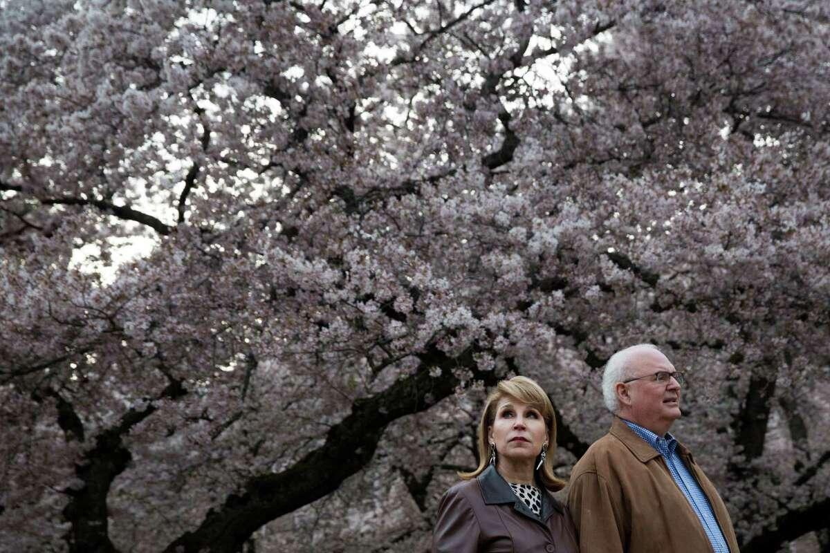 University of Washington's famed Yoshino cherry trees blossom amidst spectators on Saturday, Mar. 20, 2016.