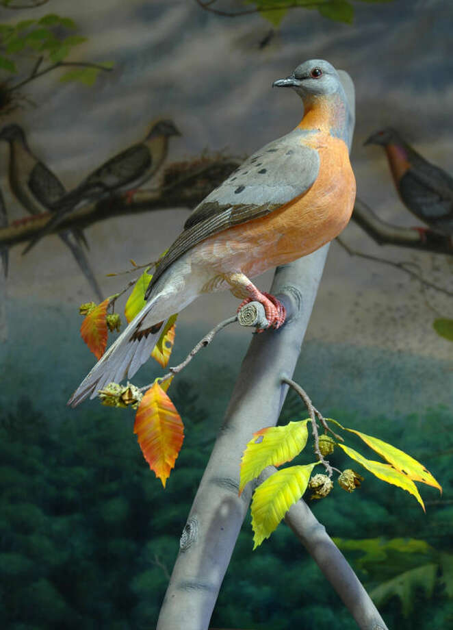 Photo providedThis is a carving of the Passenger Pigeon, which became extinct in 1914.