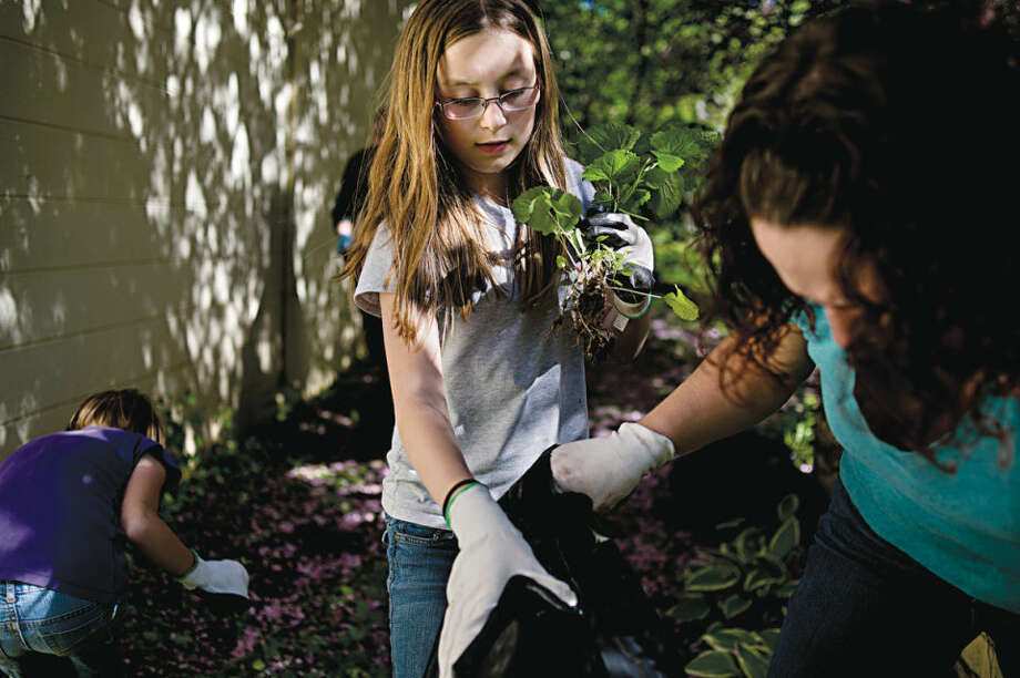 Arianna Perez, a sixth-grader at Northeast Middle School, picks up garlic mustard with her mother, Tina, near the Little Forks Conservancy on Thursday. Garlic mustard is an invasive species that can quickly take over an area and snuff out native plants. Volunteers, including students from Northeast Middle School, spent an hour uprooting the plant. Photo: NEIL BLAKE | Nblake@mdn.net
