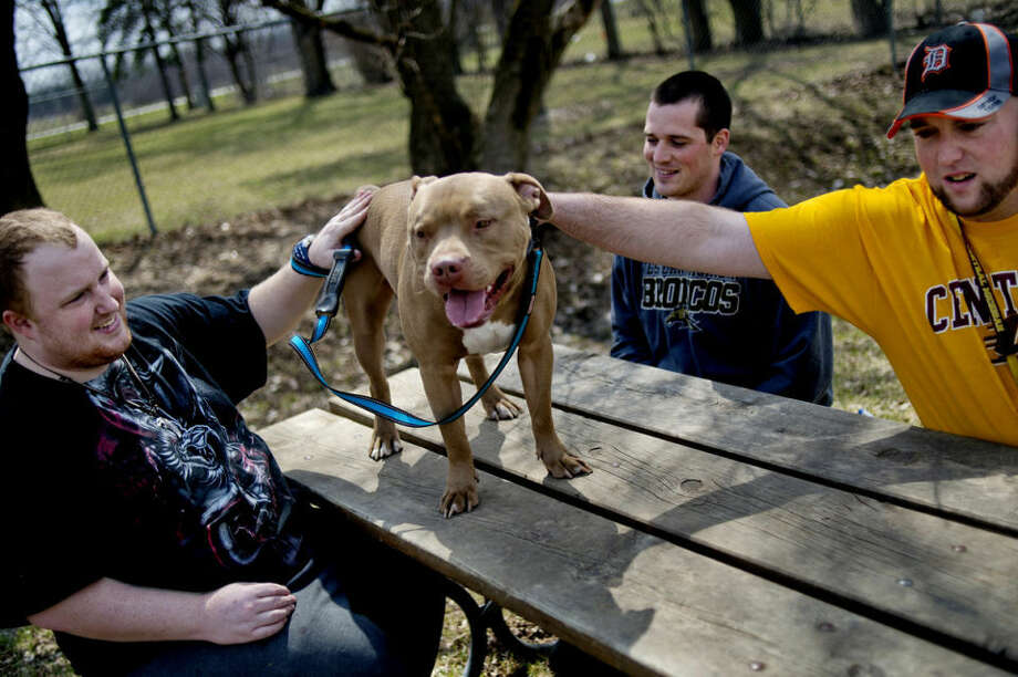Josh Willey, center, looks on as Dean Snear, left, and Brandon Crapo, right, pet a pit bull mix named Jeremy while volunteering at the Humane Society of Midland County. The three, all of Midland, were on hand to help walk dogs behind the facility. Photo: NICK KING | Nking@mdn.net