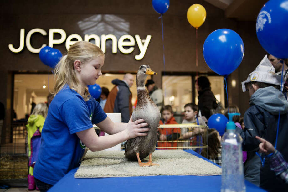 File photoAudrey Martin, 9, of Midland, holds her duck, Avery, during Kid's Day at the Midland Mall earlier this year. Martin participates in 4-H, one of the many programs offered by MSU Extension. Photo: Neil Blake/Midland  Daily News