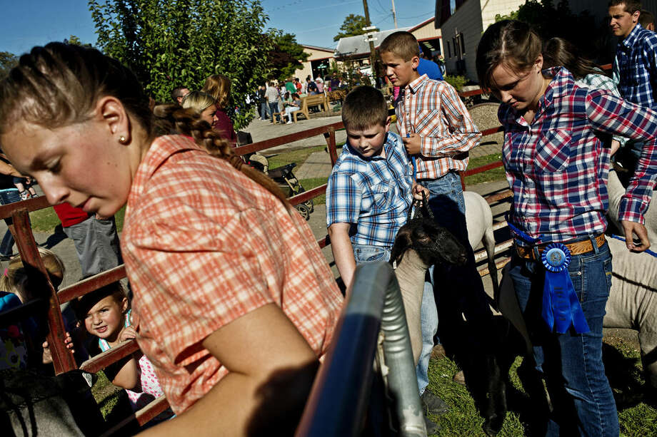 4-Hers wait in line to show and auction off their sheep during the Large Animal Auction on Thursday at the Midland County Fair. Photo: SEAN PROCTOR | Sproctor@mdn.net