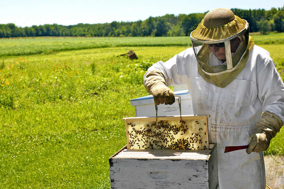 Will Sears inspects one of the new bee hive's activity on the farm. Photo: Mark Fairbrother | For The Daily News