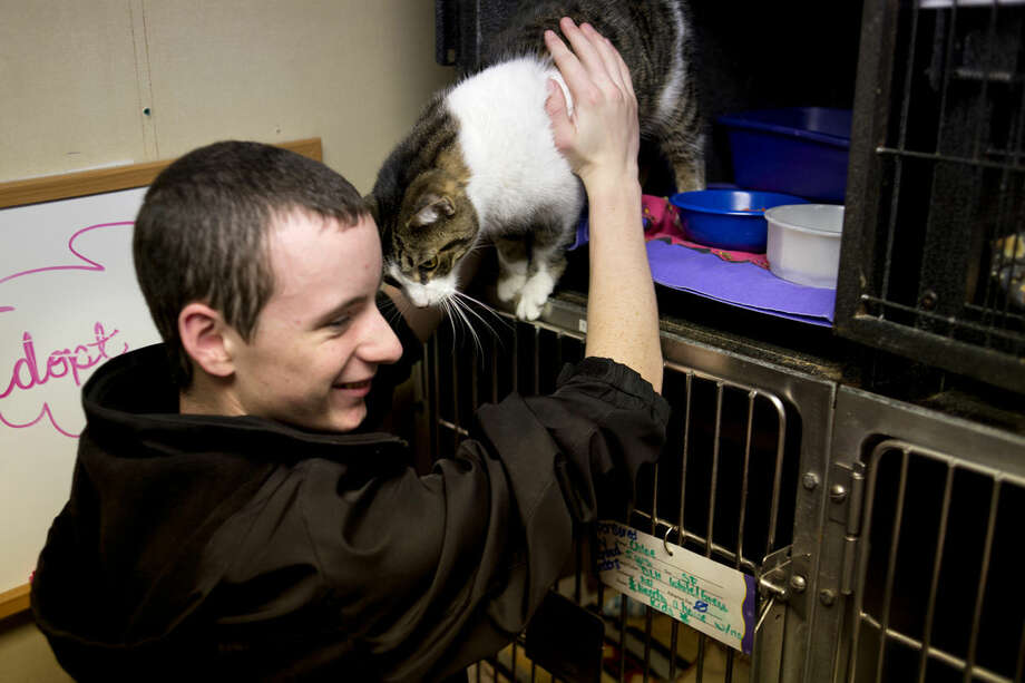 Meridian High School sophomore Josh Bacon pets a cat at the Humane Society of Midland County during a tour on Tuesday. Meridian students in Freddie Parker's Algebra II class visited the shelter after doing a project on how many offspring a cat could produce over 18 months. Photo: NEIL BLAKE | Nblake@mdn.net