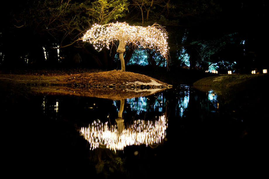 Trees scattered through Dow Gardens were lit up in lights during the annual Christmas Walk last week. This weekend, the walk runs from 5 to 7:30 p.m. on Friday and Saturday. Photo: NEIL BLAKE | Nblake@mdn.net