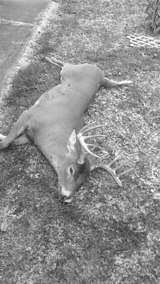 Midland's Brian Zemanek bagged this 12-point buck on Nov. 15 in Holly.
