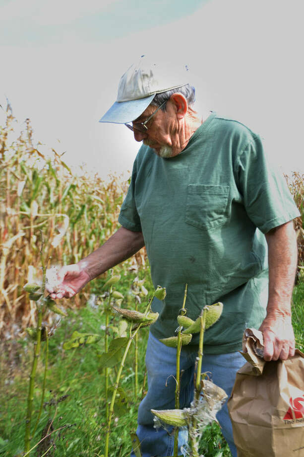 Denny Brooks collects milkweed pods and seeds on his Midland County property; he'll store them in the paper bag until dry, then sort out and plant the seeds. Photo: Steve Griffin   For The Daily News