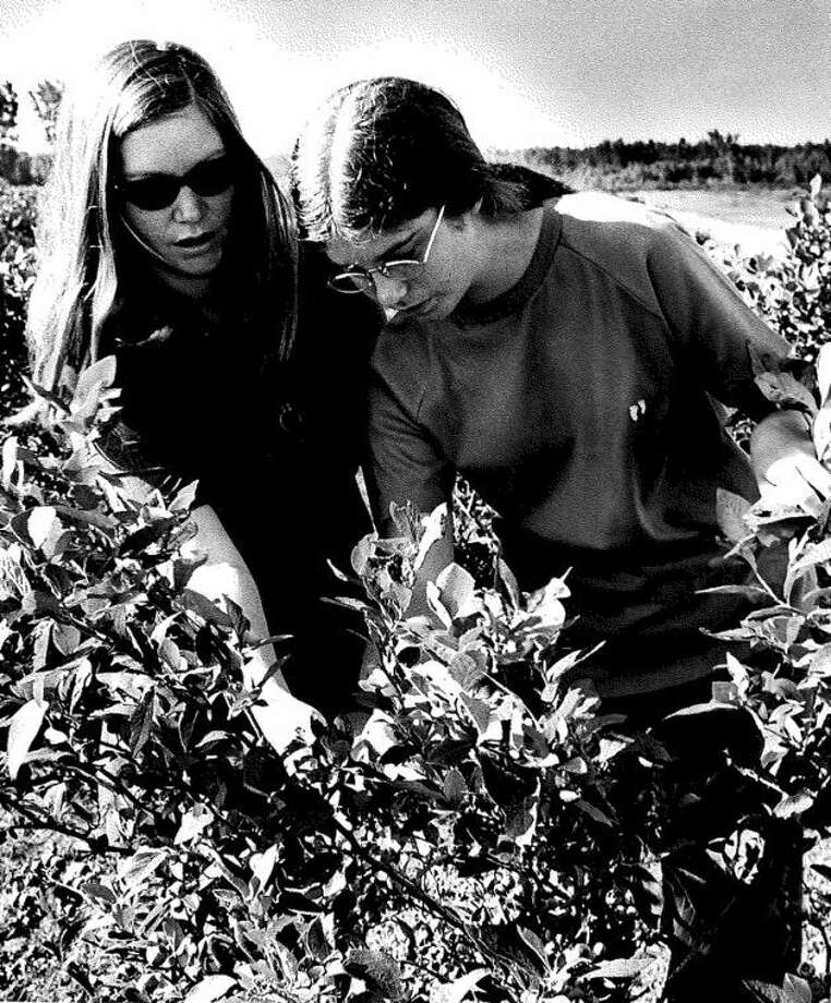 A 1971 photo of Dian Gilmore picking blueberries with her mother. Photo: Photo Provided
