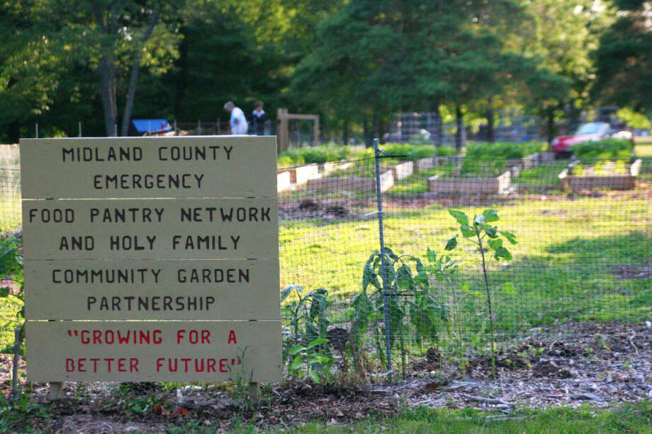 """A community garden project that began with a group of Holy Family Episcopal Church parishioners and volunteers donated close to 300 pounds of fresh produce to area food pantries last year. The group is harvesting three types of vegetables this year and is looking for local collaboration, coordinator Tony Germain said. """"It's pretty much just (for) anyone who has any interest in gardening, regardless of skill,"""" he said. Photo: Hilary Farrell   For The Daily News"""