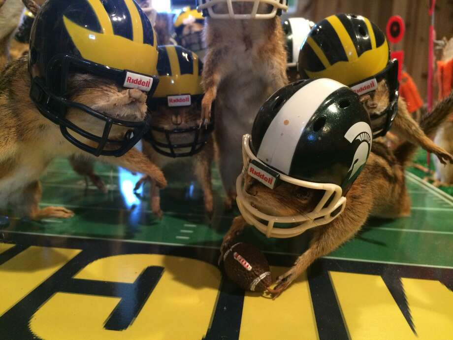 This photo taken Monday, Oct. 26, 2015, shows stuffed chipmunks portraying players on the final play of the Michigan State-Michigan NCAA college football game at the home of taxidermist Nick Saade in Lansing, Mich. Michigan State's Jalen Watts-Jackson returned a fumble for the game-winning touchdown on Oct. 17. Saade tells the Lansing State Journal that the chipmunks were trapped by friends as nuisance animals. (Judy Putnam/Lansing State Journal via AP) NO SALES; MANDATORY CREDIT Photo: Judy Putnam