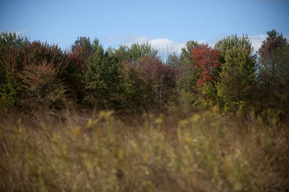 Leaves begin to change color along the Heron Marsh in the Chippewa Nature Center wetlands area on the last day of September. Photo: BRITTNEY LOHMILLER | Blohmiller@mdn.net