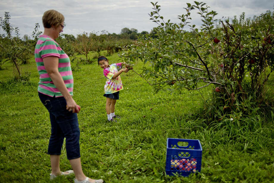 Sophie Stamas, 6, right, smiles at her mother Sara while picking Fuji apples at Sophie's grandparents Bill and Pat Kuehne's business Apple Blossom Orchard in Midland. Photo: Nick King/Midland Daily News
