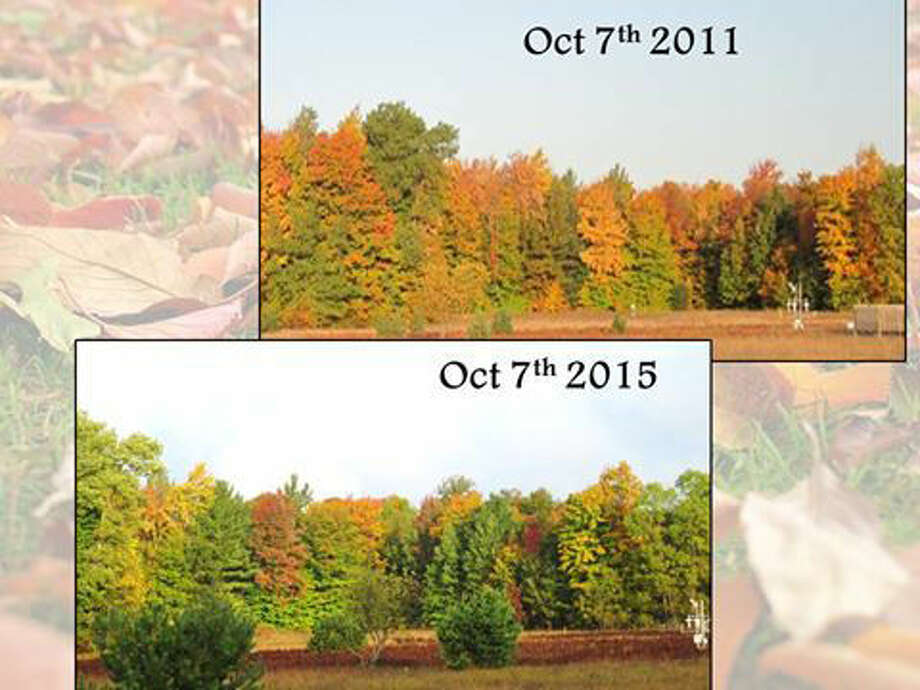 These photographs were both taken on Oct. 7, the top in 2011 and the bottom in 2015, on the property of the National Weather Service Gaylord. More color was evident in 2011 than is seen this year. Photo: National Weather Service Gaylord