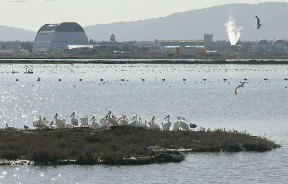 Water birds are seen in the Don Edwards San Francisco Bay National Wildlife Refuge. Photo: Kat Wade, Special To The Chronicle