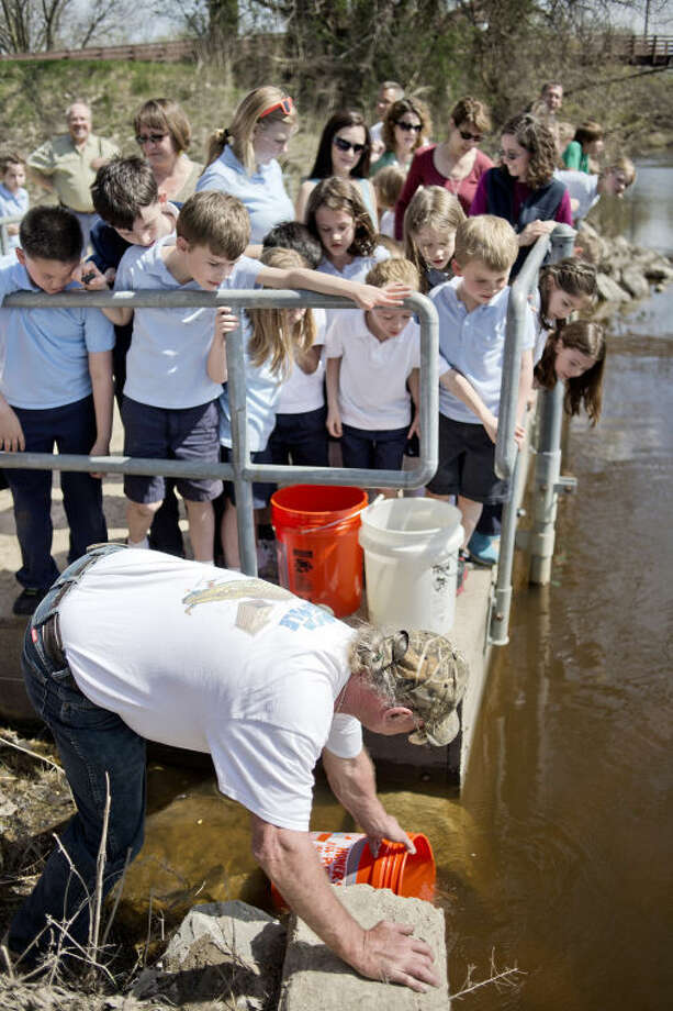 NICK KING | nking@mdn.netStudents from St. Brigid gather to watch as Mark Trudell, of the Michigan Steelheaders, releases the salmon into the Tittabawassee River. Photo: Nick King/Midland  Daily News