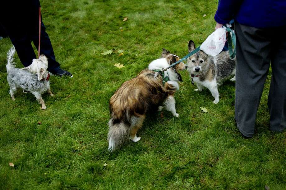 FILE - Dogs mingle in the grass during St. Francis Day with the Blessing of the Animals at Saint John's Episcopal Church. Photo: Nick King/Midland Daily News