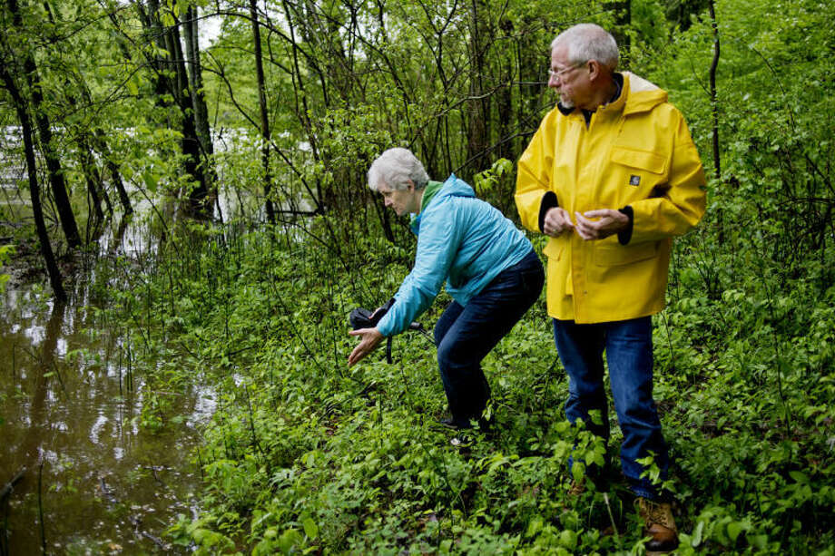 NICK KING | nking@mdn.netChris French, left, points out the area of Michigan's first salt well to Tom Trombley, deputy director of the Historical Society of Saginaw County Castle Museum, in Sanford. On this day, the well was not visible due to elevated water levels of the Tittibawassee River. Photo: Nick King/Midland  Daily News