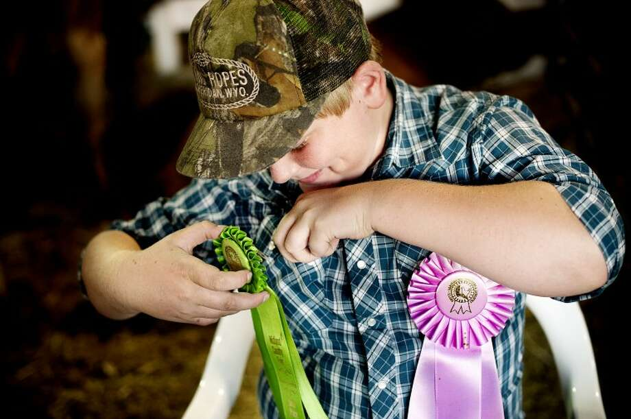 "THOMAS SIMONETTI | tsimonetti@mdn.netCody Finney, 11, of Coleman pins on his ribbons before the large animal auction at the Midland County Fair. With his steer, Reddy Freddy, Finney won ribbons for reserve champion ""market"" and sixth place for showmanship. Photo: Thomas Simonetti/Midland  Daily"