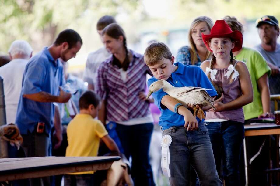 Nine-year-old Lucas Hafelein of Coleman plays with his duck as he waits in line to auction it off Wednesday evening at Midland County's 2011 Small Animal Auction at the Midland County Fairgrounds. Photo: SARA WINKLER | For The Daily News