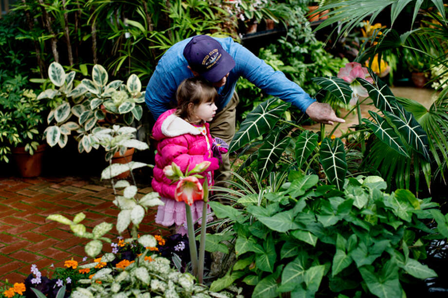 More exotic butterflies visible this year at Dow Gardens - Midland ...