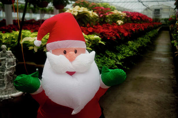 A blow up Santa Claus figure livens up Roy Kutchey Greenhouses in Midland on Tuesday afternoon along a row of poinsettias.