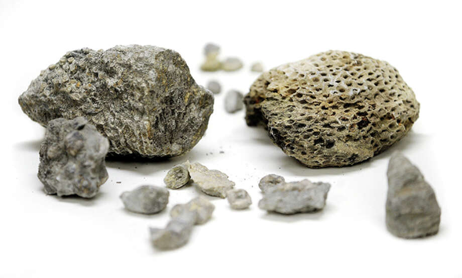 Some of the fossils collected at the Alpena sites. Photo Nick King
