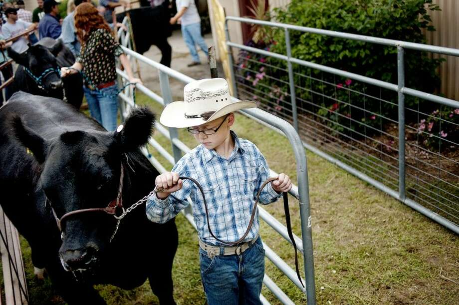BRITTNEY LOHMILLER | blohmiller@mdn.netGabe McGuire, 10, of Breckenridge, leads his 15-month-old steer, Elvis, into the arena for the large animal auction Thursday evening at the Midland County Fair. Photo: Brittney Lohmiller