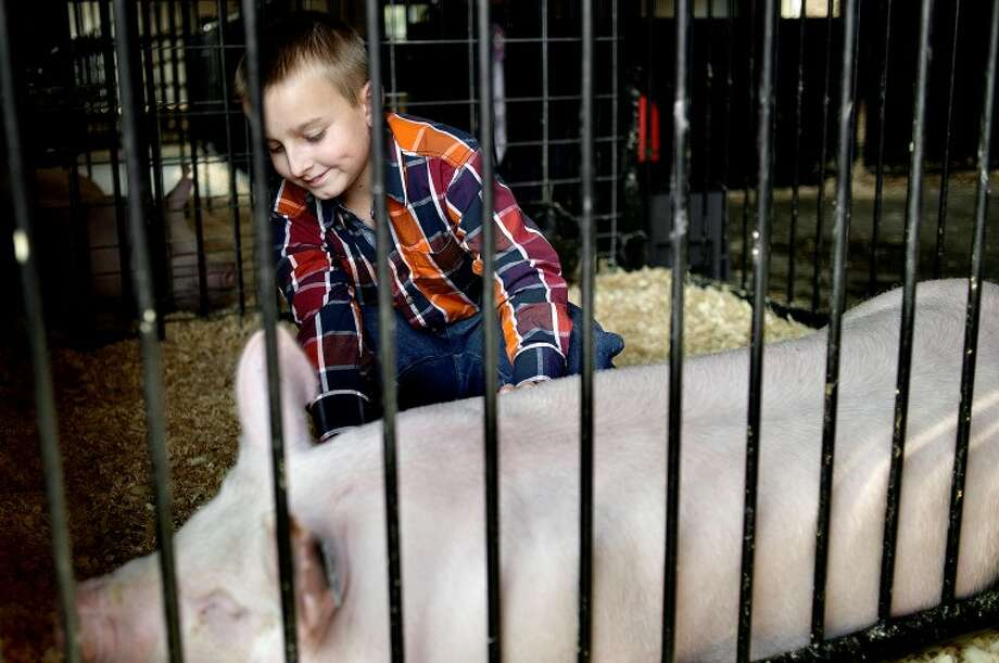 NICK KING | nking@mdn.net Cole Johnston, 10, tends to his pig in the barn while waiting for the Large Animal Auction to start Thursday at the Midland County Fair. Cole and his brother Andrew, 8, are the third generation of Breasbois to participate in 4H at the fair. Photo: Nick King/Midland  Daily News
