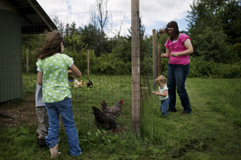 NEIL BLAKE | nblake@mdn.netJenny Lowe, far right, feeds her chickens with her daughter, Elizabeth, 1, as her other children, Daniel, 3, and, Margaret, 6, feed the chickens scraps from the other side of the pen. Photo: Neil Blake/Midland  Daily News