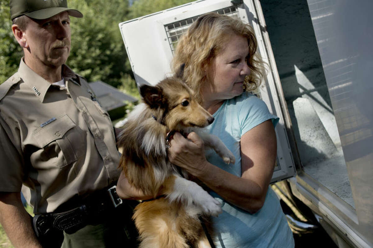 SEAN PROCTOR | sproctor@mdn.netRobin Mathews, right, of Beaverton, carries a sheltie recently recovered from a residence as Midland County Animal Control officer Rick Shields looks on Wednesday afternoon at an undisclosed location in Gladwin County. Thirty-eight Shetland sheepdogs, all raggedly thin, were recovered from the house in early July with the help of the sheriff's office, animal control and the Humane Society of Midland County.