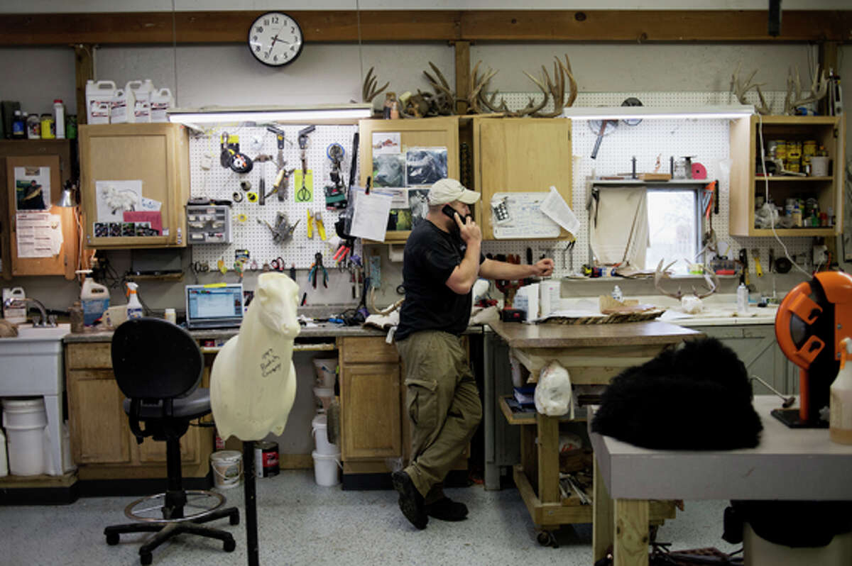 NEIL BLAKE | nblake@mdn.netJustin Pohl talks on the phone in his taxidermy shop in Midland on Wednesday. Pohl has clients around the country and his work is part of a display at the Midland Center for the Arts.