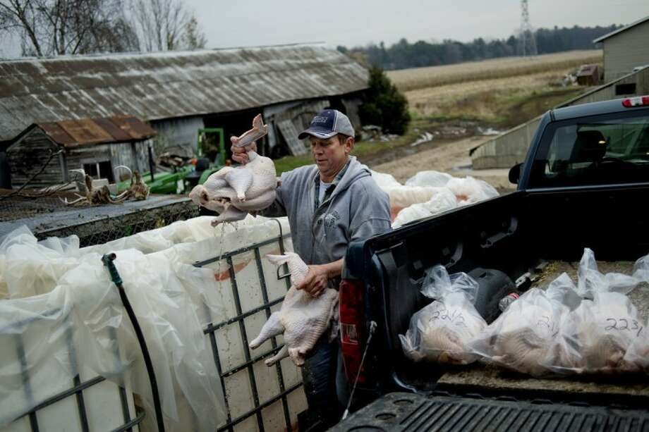 NICK KING | nking@mdn.netRuss Varner carries two turkeys to be packaged after slaughtering at his father's farm in Midland on Tuesday.  Photo: Nick King/Midland  Daily News