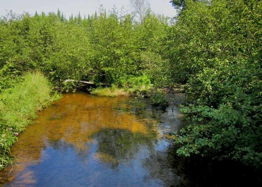 Photo providedThis 950-foot stretch of the west branch of the Cedar River is now permanently protected under a conservation easement signed by the Guthrie family.