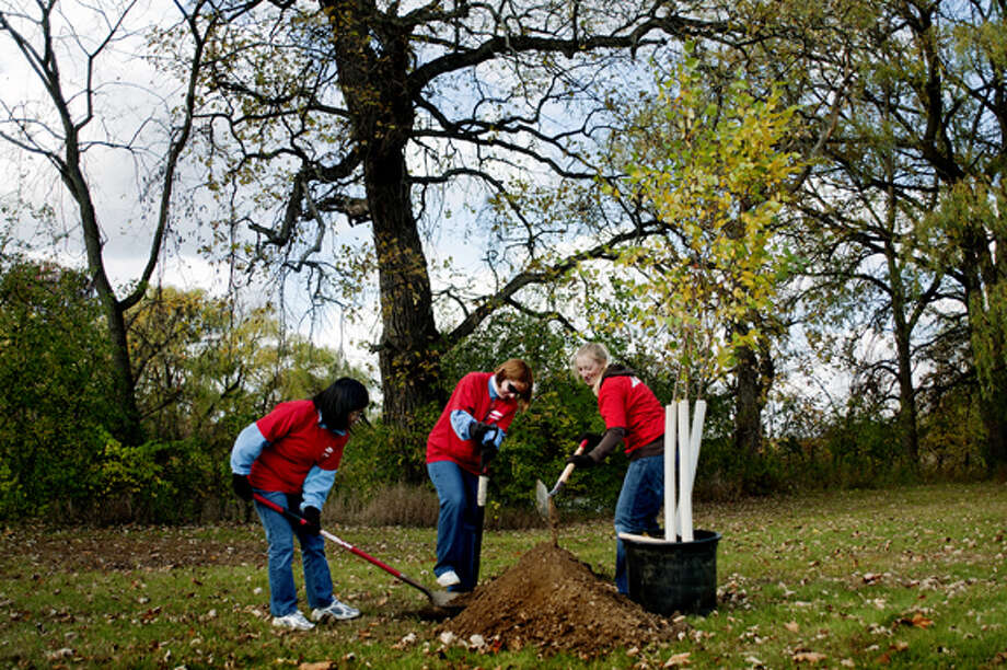 Volunteers from Dow Chemical, from left, Lizhu Lin, Vickie Langer and Heather Tidwell dig a hole for the tree they were planting Monday at Emerson Park. About 50 trees were planted at the park. About 100-150 volunteers planted 290 trees in city parks to help replace ash trees that will be removed because of the emerald ash borer infestation. Photo: NICK KING | Nking@mdn.net  / Midland Daily News