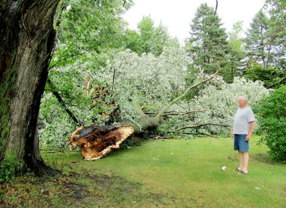 "Ralph Wirtz | ralphewirtz@mdn.netBryan Miller stands near one of three maple trees that were toppled by the storm that ripped through Midland County Monday afternoon. Kathy Miller said her grandchildren ""love playing on"" a fourth tree, a weeping willow, that also was a victim of storm. The Millers live at the end of McGruder Road where it abuts the US-10 freeway west of Sanford."