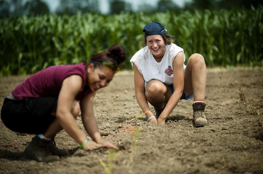 Brianna Evans of Saginaw, left, and Shannon Hellebuyck of Midland, right, plant giant miscanthus in a field on Carter Road near the Dow Corning Corporate Center in Williams Township on Thursday. The plant could be a future source of energy for the proposed bio-mas energy facility in Midland. Photo: NEIL BLAKE | Nblake@mdn.net