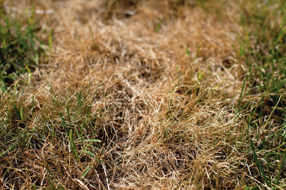 With temperatures in the 90s throughout the first week in July, lawns are turning brown and drying out. Temperatures soared into the high 90s on Friday causing The National Weather Service to issue an excessive heat warning for Midland. Photo: Brittney Lohmiller / Midland Daily News