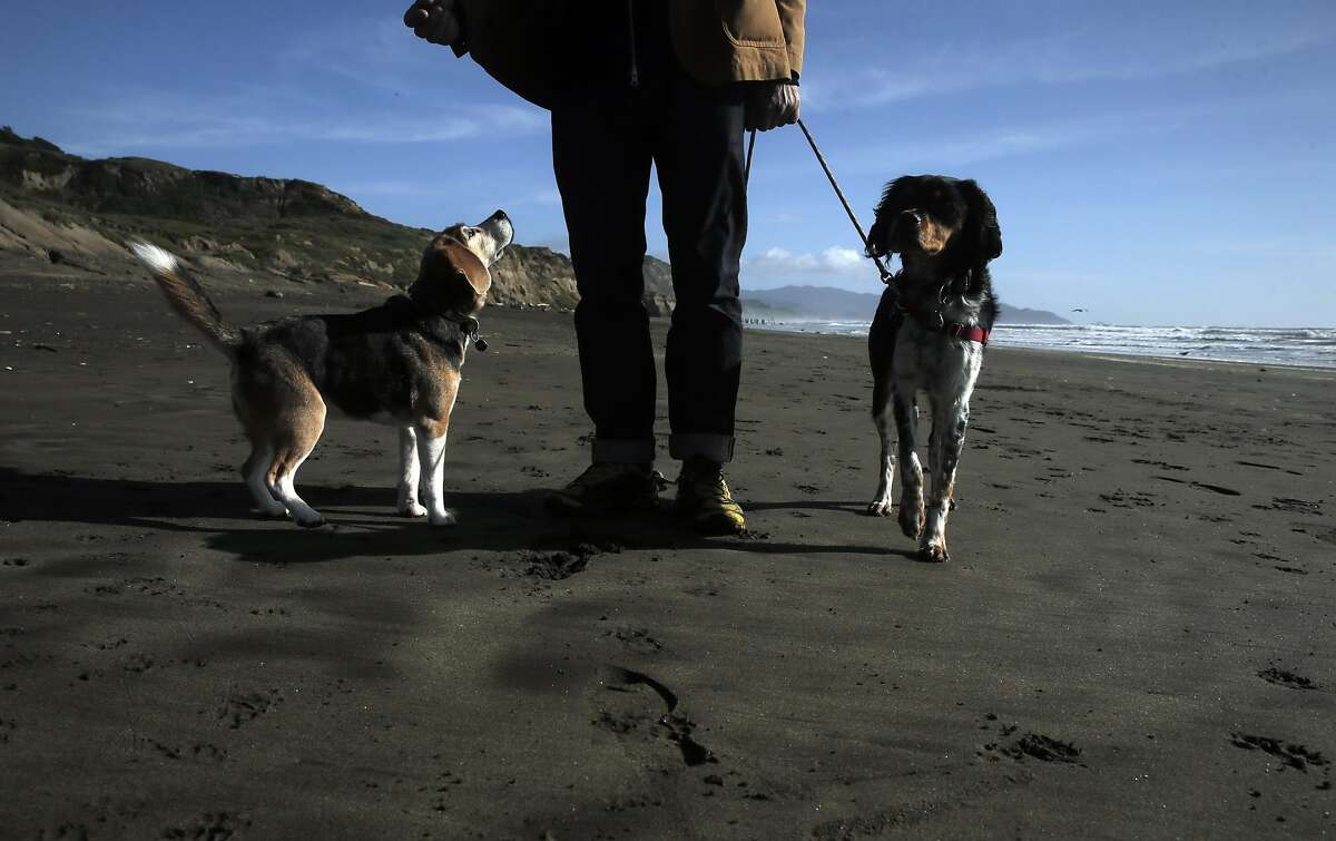 David Knopp walks with Pickle, right, and Buddy, left, as he and other dogs and their humans enjoy the area at Fort Funston in San Francisco, Calif., on Tuesday, March 22, 2016. The National Park Service has proposed plans to restrict off-leash access for dogs in some parts of the GGNRA, eliminating them in San Mateo County.