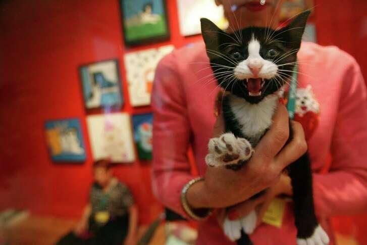 Volunteer to help cats find homes.