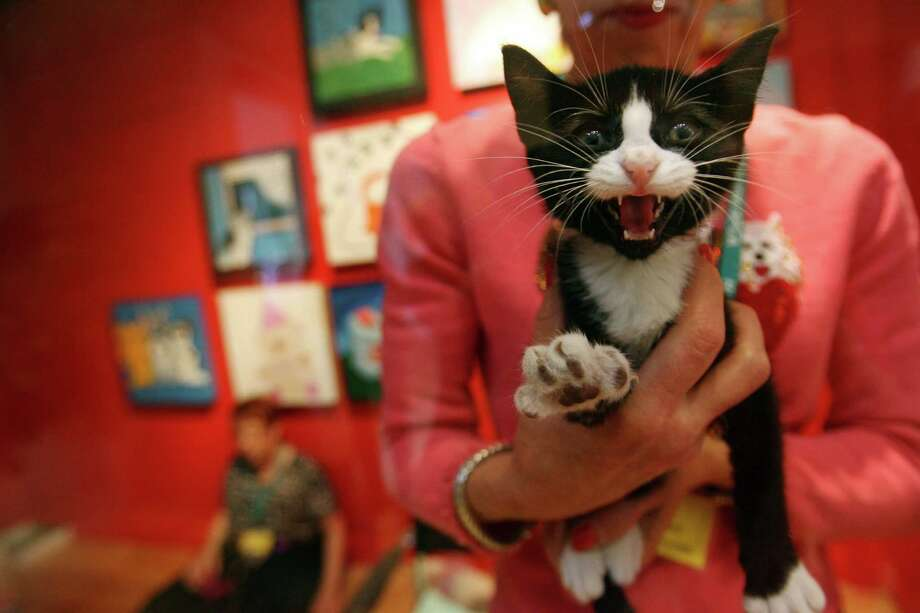 Volunteer to help cats find homes. Photo: Mayra Beltran, MBO / Houston Chronicle Rev-Share