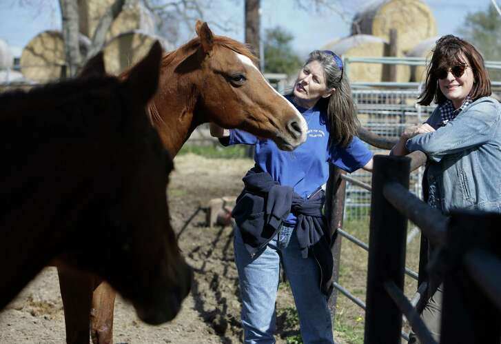 Executive director, Rebecca Williams, center, and Ginger Barber, right, look horses named Jade, left, and Holiday at Habitat for Horses, 8538 Bissell Rd., Saturday, Jan. 30, 2016, in Manvel. ( Melissa Phillip / Houston Chronicle )